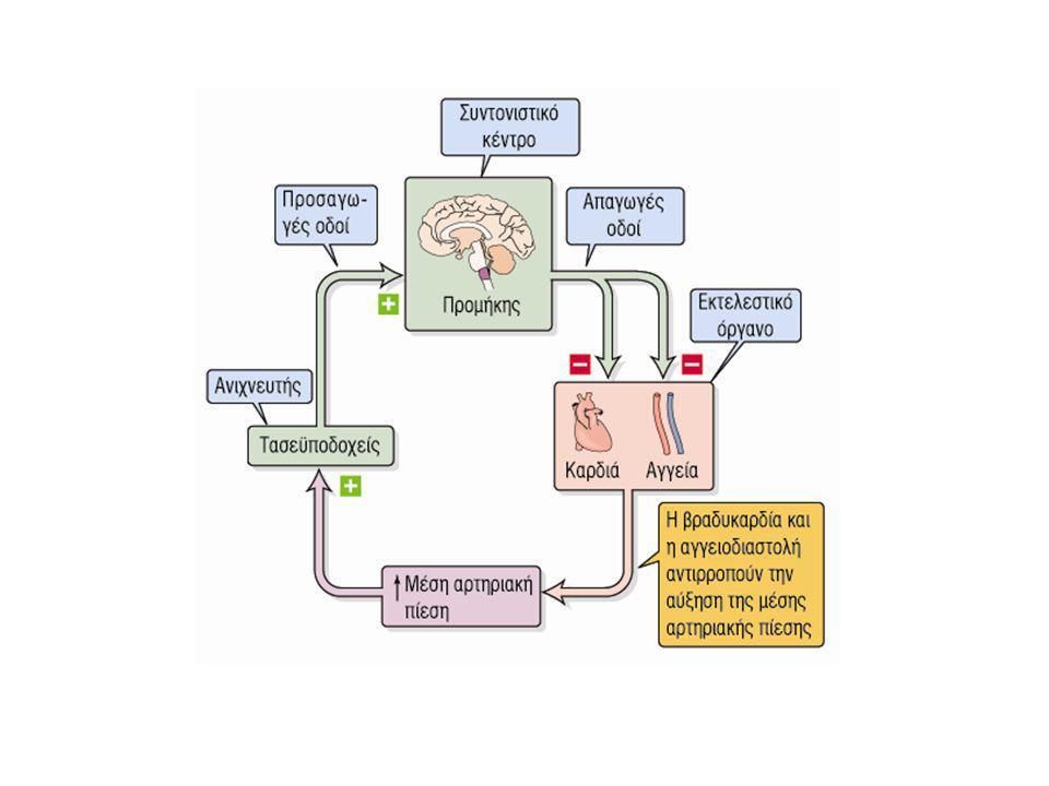 Μεσοπρόθεσμη/Μακροπρόθεσμη ρύθμιση αρτηριακής πίεσης • Χρονική κλίμακα ωρών ή ημερών • Μέσω χυμικών μηχανισμών ρύθμισης - αγγειοδραστικές(βιογενείς αμίνες, πεπτίδια, προσταγλανδίνες, ΝΟ) -μη αγγειοδραστικές ουσίες • Ρύθμιση όγκου εξωκυτταρικού υγρού
