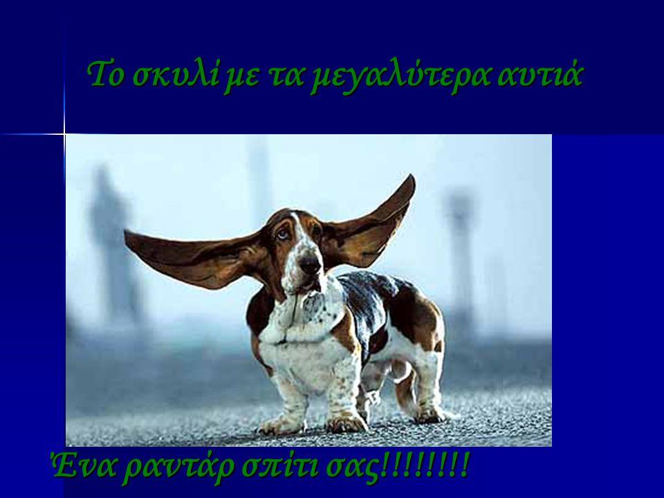 Το σκυλί με τα μεγαλύτερα αυτιά Ένα ραντάρ σπίτι σας!!!!!!!!