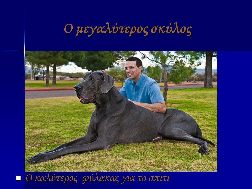 Ο μεγαλύτερος σκύλος ΟΟΟΟ καλύτερος φύλακας για το σπίτι