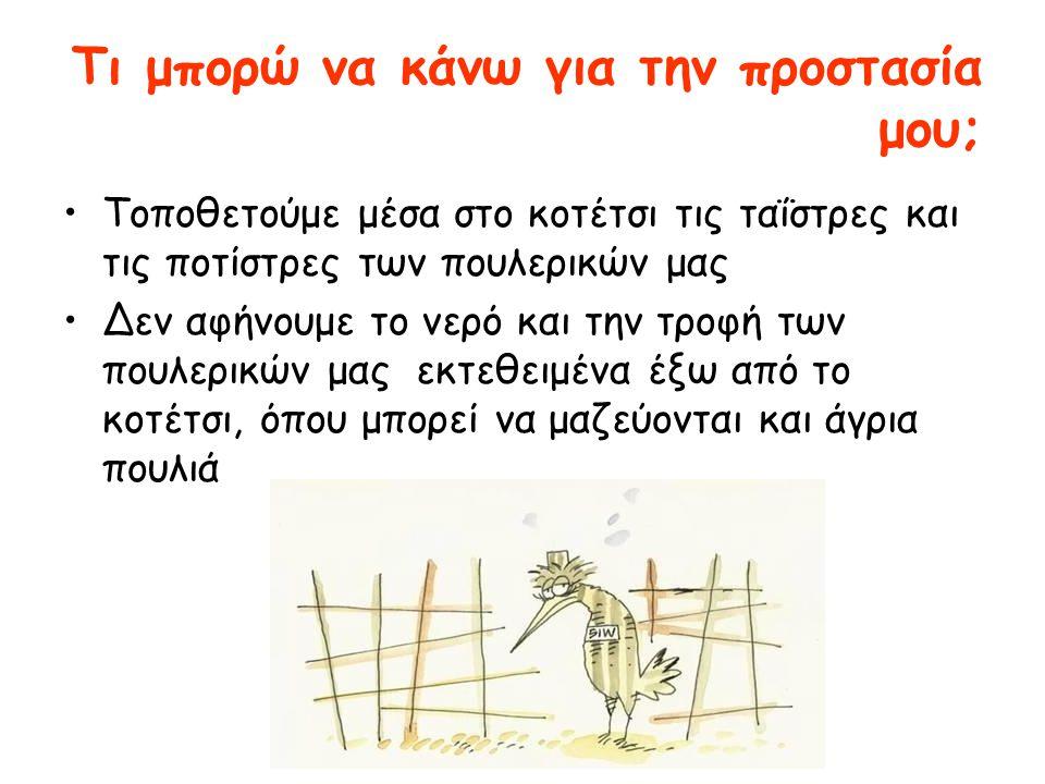 Τι μπορώ να κάνω για την προστασία μου; •Tοποθετούμε μέσα στο κοτέτσι τις ταΐστρες και τις ποτίστρες των πουλερικών μας •Δεν αφήνουμε το νερό και την τροφή των πουλερικών μας εκτεθειμένα έξω από το κοτέτσι, όπου μπορεί να μαζεύονται και άγρια πουλιά
