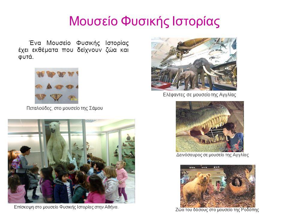 Μουσείο Φυσικής Ιστορίας Ένα Μουσείο Φυσικής Ιστορίας έχει εκθέματα που δείχνουν ζώα και φυτά. Επίσκεψη στο μουσείο Φυσικής Ιστορίας στην Αθήνα. Δεινό