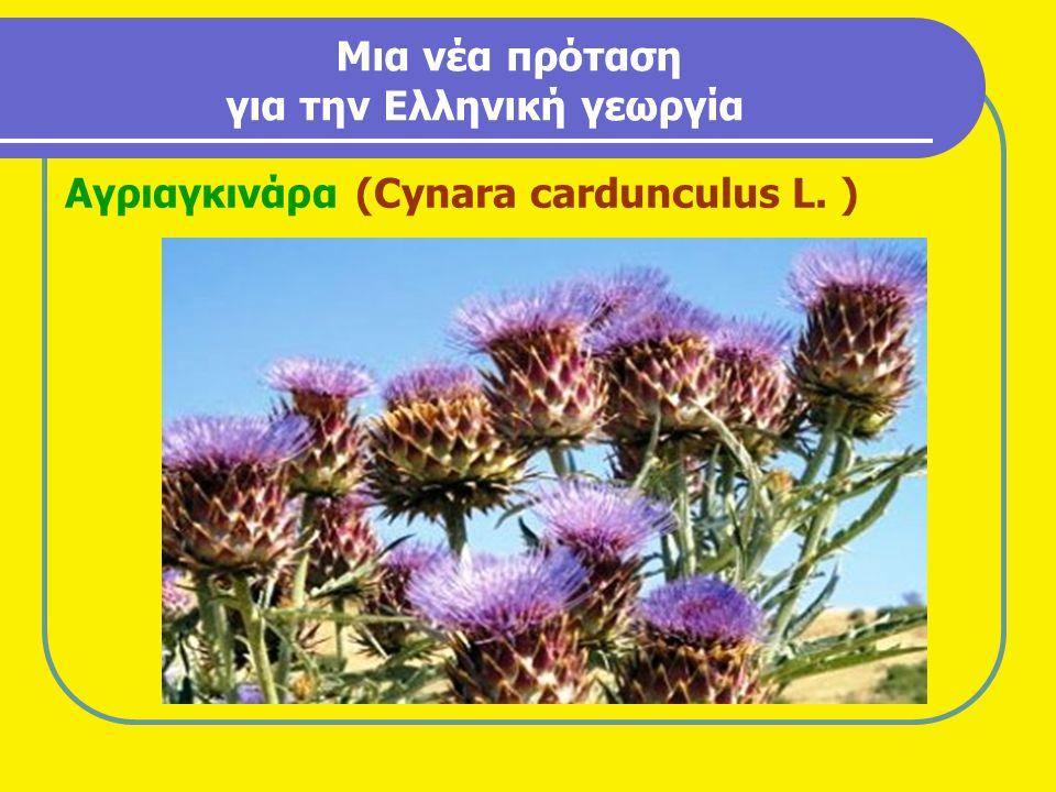 Μια νέα πρόταση για την Ελληνική γεωργία Αγριαγκινάρα (Cynara cardunculus L. )