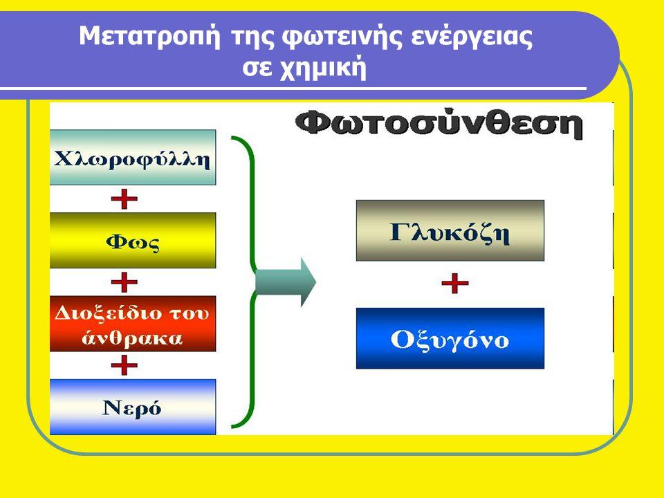 Τεχνολογία παραγωγής pellets Η παραγωγή pellets από στερεά βιομάζα περιλαμβάνει τα εξής στάδια: α) Μεταφορά της από το χωράφι στο σημείο επεξεργασίας της.