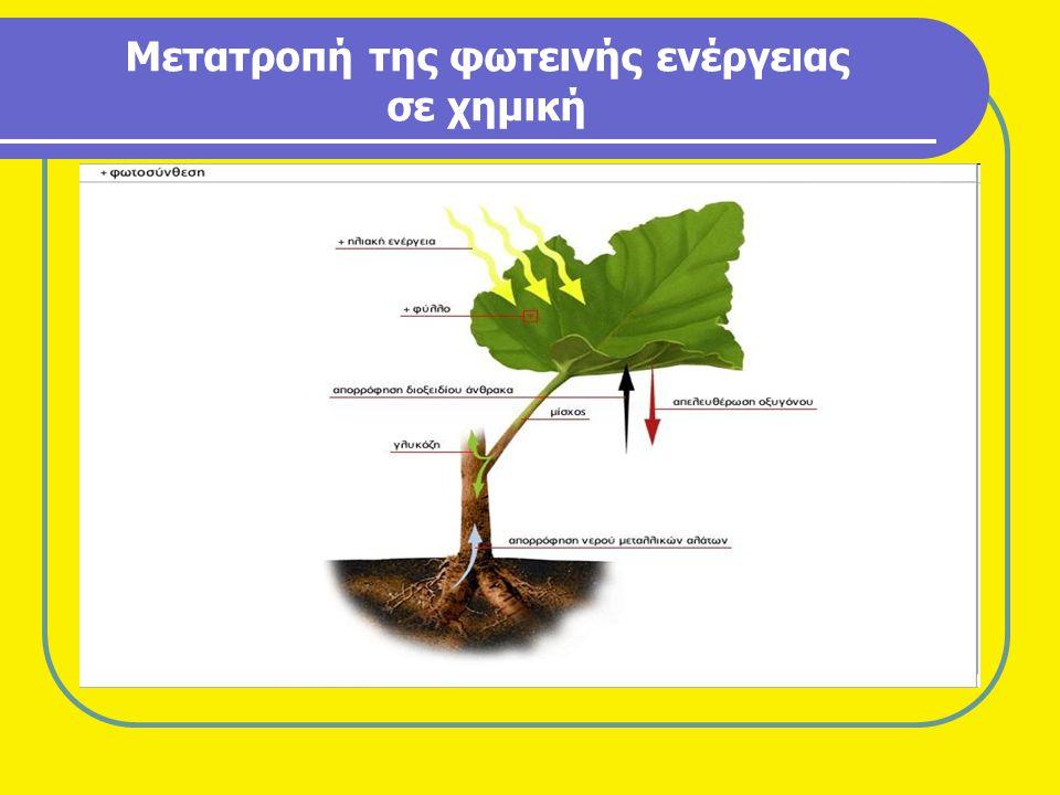 Κυριότεροι τύποι στερεών καυσίμων βιομάζας •Κ•Κομμάτια ξύλου - Καυσόξυλα