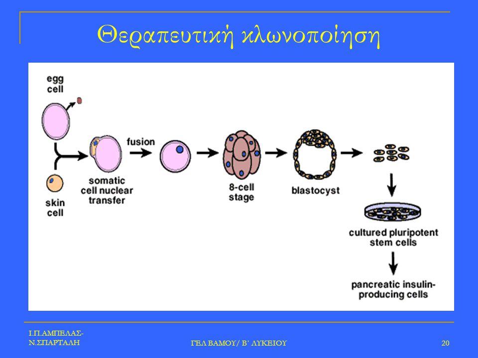 Ι.Π.ΑΜΠΕΛΑΣ- Ν.ΣΠΑΡΤΑΛΗ ΓΕΛ ΒΑΜΟΥ/ Β΄ ΛΥΚΕΙΟΥ 20 Θεραπευτική κλωνοποίηση