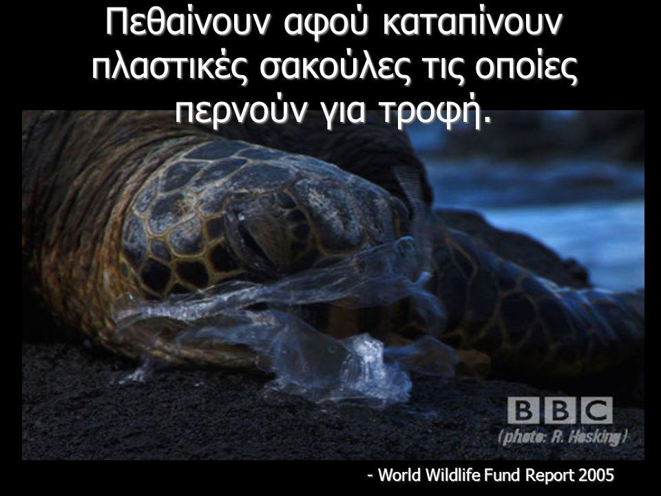 Πεθαίνουν αφού καταπίνουν πλαστικές σακούλες τις οποίες περνούν για τροφή.