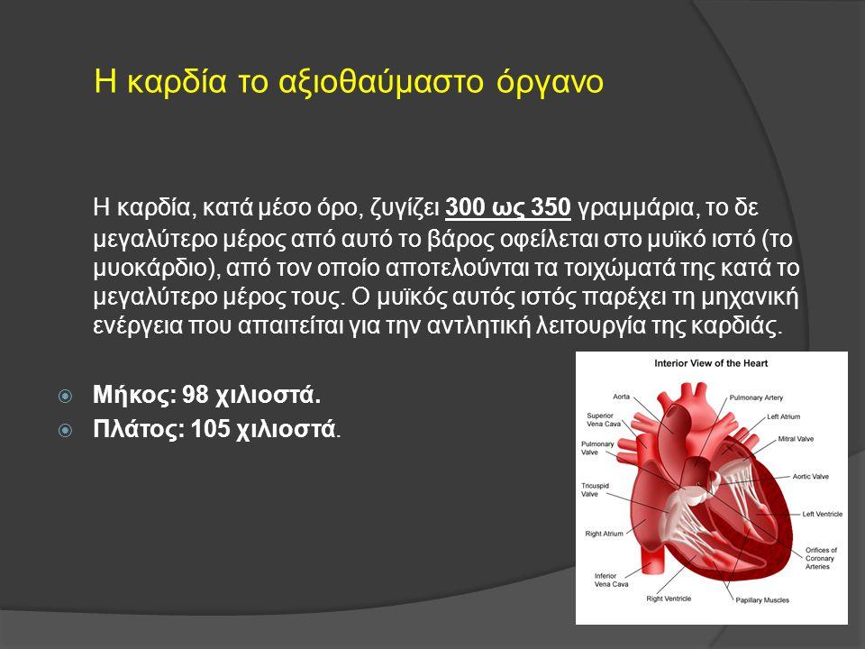 H καρδία το αξιοθαύμαστο όργανο Η καρδία, κατά μέσο όρο, ζυγίζει 300 ως 350 γραμμάρια, το δε μεγαλύτερο μέρος από αυτό το βάρος οφείλεται στο μυϊκό ισ