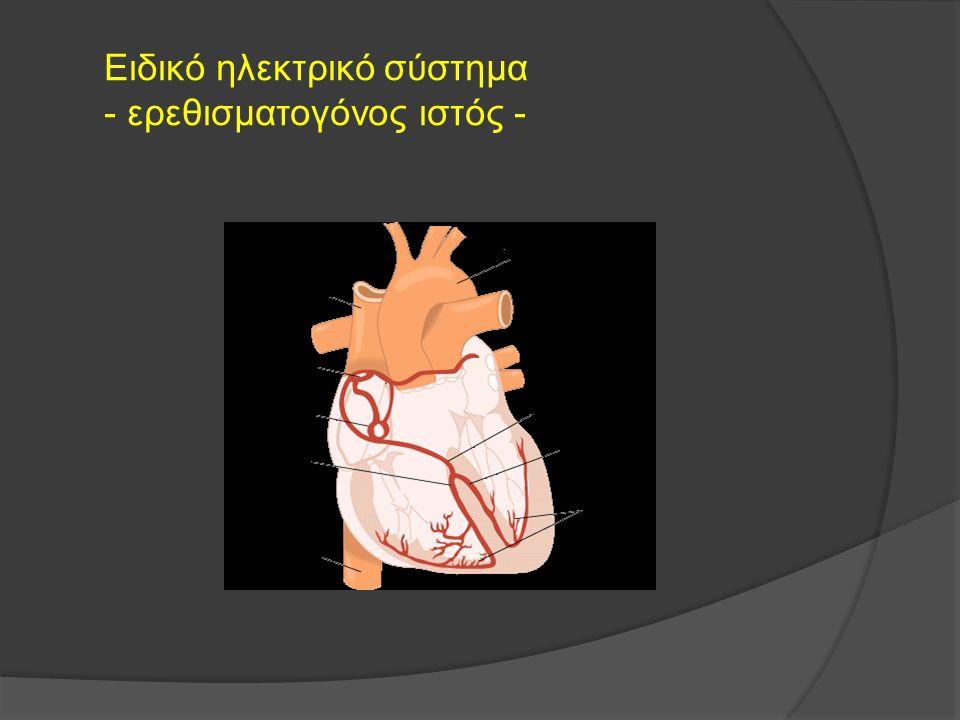 Ειδικό ηλεκτρικό σύστημα - ερεθισματογόνος ιστός -