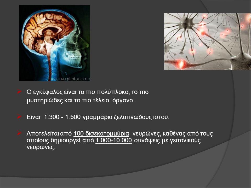  Ο εγκέφαλος είναι το πιο πολύπλοκο, το πιο μυστηριώδες και το πιο τέλειο όργανο.  Είναι 1.300 - 1.500 γραμμάρια ζελατινώδους ιστού.  Αποτελείται α