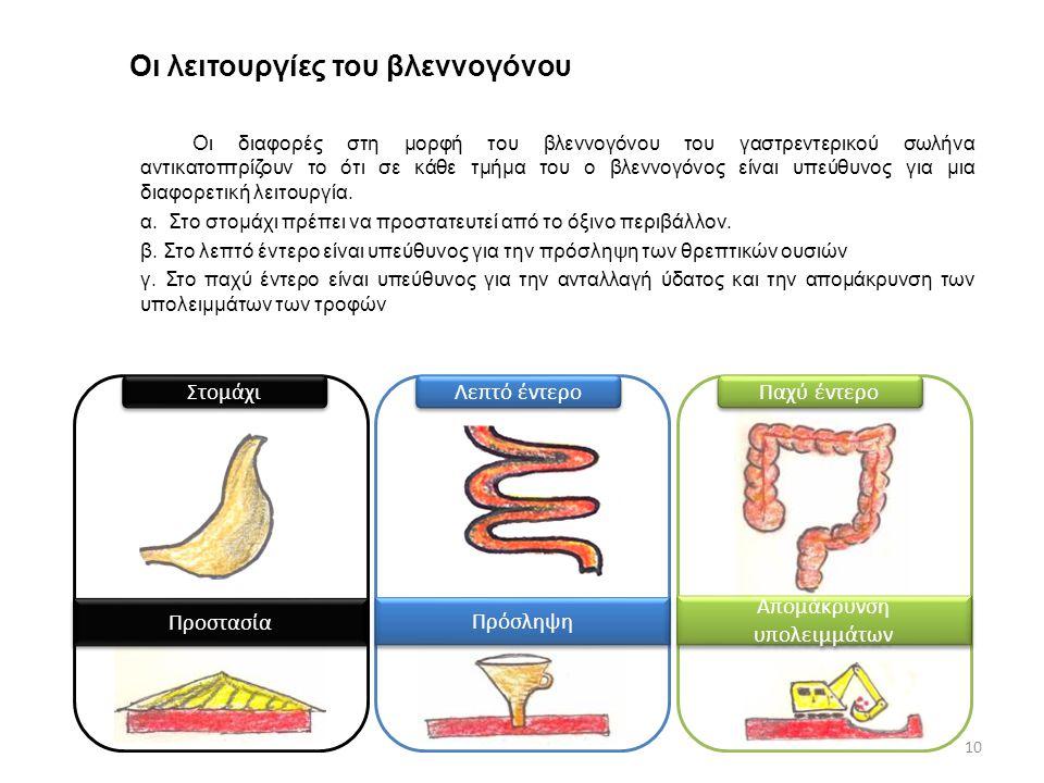 Οι λειτουργίες του βλεννογόνου 10 Οι διαφορές στη μορφή του βλεννογόνου του γαστρεντερικού σωλήνα αντικατοπτρίζουν το ότι σε κάθε τμήμα του ο βλεννογό