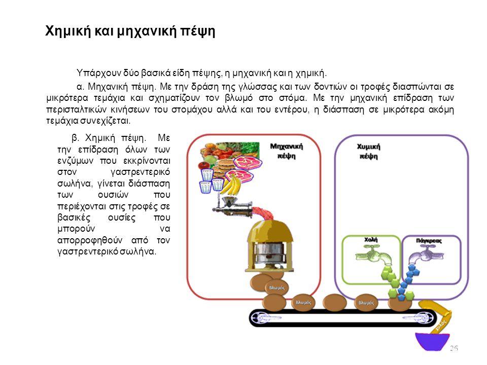 Χημική και μηχανική πέψη Υπάρχουν δύο βασικά είδη πέψης, η μηχανική και η χημική. α. Μηχανική πέψη. Με την δράση της γλώσσας και των δοντιών οι τροφές