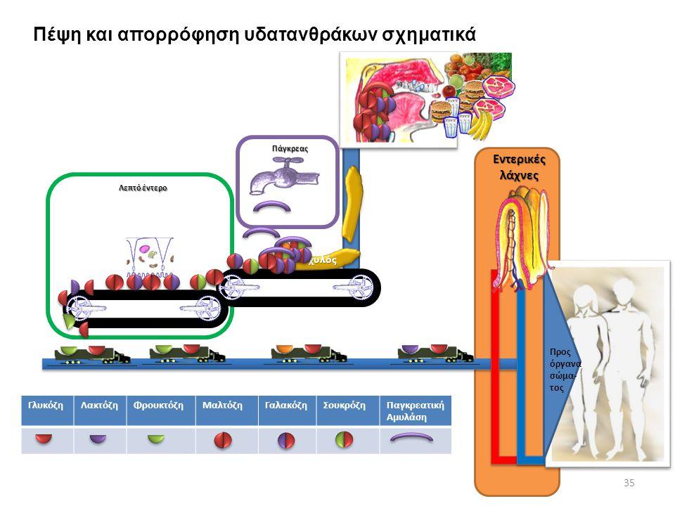ΓλυκόζηΛακτόζηΦρουκτόζηΜαλτόζηΓαλακόζηΣουκρόζηΠαγκρεατική Αμυλάση 35 Πάγκρεας Λεπτό έντερο χυλόςχυλός Προς όργανα σώμα- τος Εντερικές λάχνες Πέψη και απορρόφηση υδατανθράκων σχηματικά