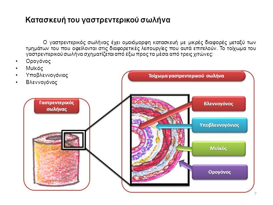 Ο βλεννογόνος είναι ο εσωτερικός χιτώνας του γαστρεντερικού συστήματος.