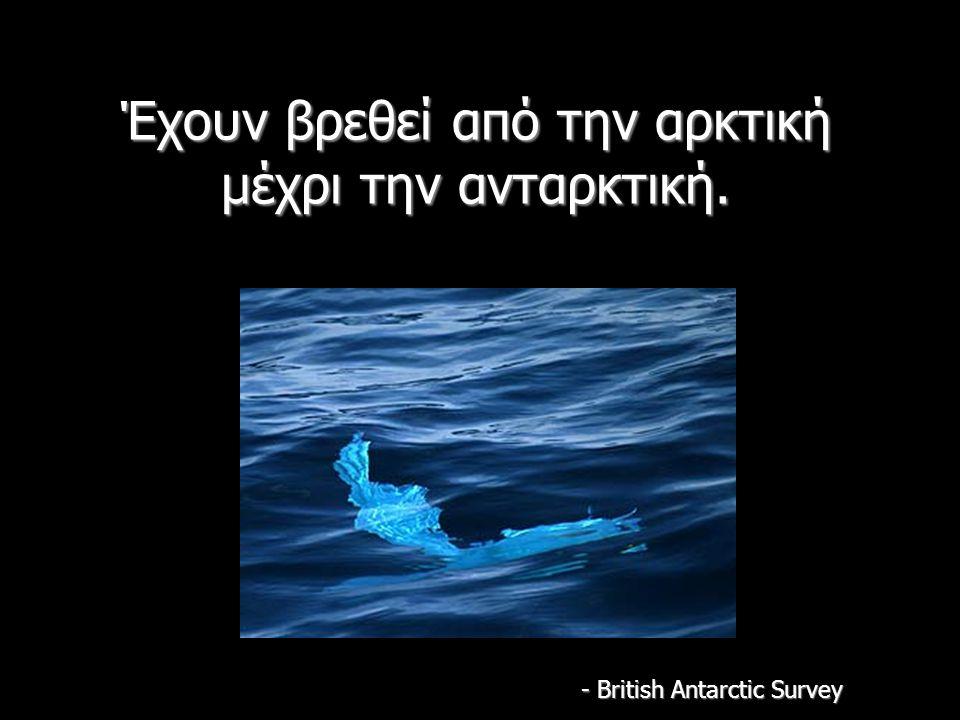 Έχουν βρεθεί από την αρκτική μέχρι την ανταρκτική. - British Antarctic Survey