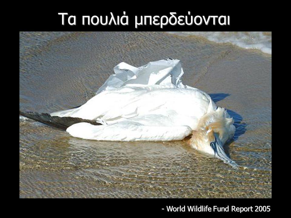 Τα πουλιά μπερδεύονται - World Wildlife Fund Report 2005