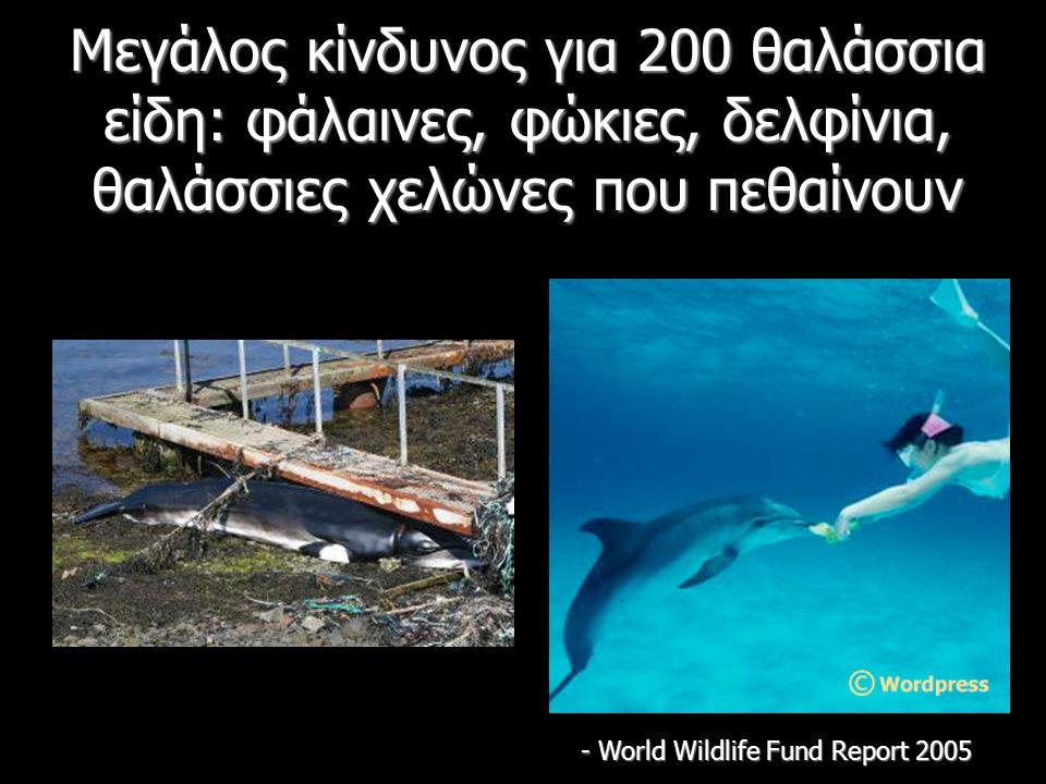 Μεγάλος κίνδυνος για 200 θαλάσσια είδη: φάλαινες, φώκιες, δελφίνια, θαλάσσιες χελώνες που πεθαίνουν - World Wildlife Fund Report 2005