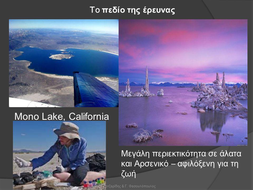 Χ. Γκοτζαρίδης & Γ. Φασουλόπουλος Το πεδίο της έρευνας Mono Lake, California Μεγάλη περιεκτικότητα σε άλατα και Α ρσενικό – αφιλόξενη για τη ζωή