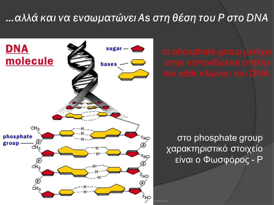 Χ. Γκοτζαρίδης & Γ. Φασουλόπουλος …αλλά και να ενσωματώνει Αs στη θέση του Ρ στο DNA τ ο phosphate group μετέχει στην «σπονδυλική στήλη» του κάθε κλών