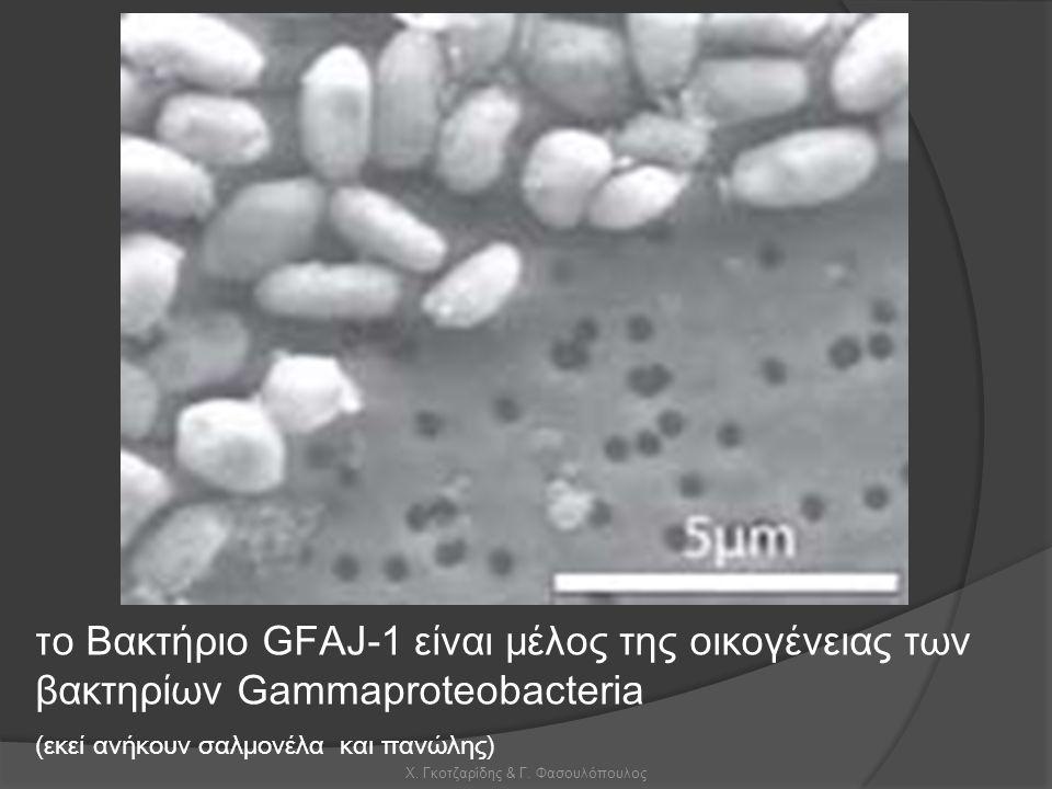 Χ. Γκοτζαρίδης & Γ. Φασουλόπουλος τ ο Βακτήριο GFAJ-1 είναι μέλος της οικογένειας των βακτηρίων Gammaproteobacteria (εκεί ανήκουν σαλμονέλα και πανώλη