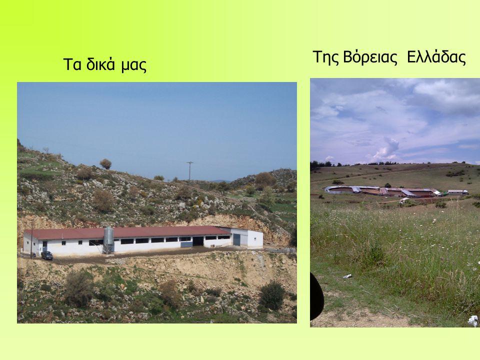 Τα δικά μας Της Βόρειας Ελλάδας