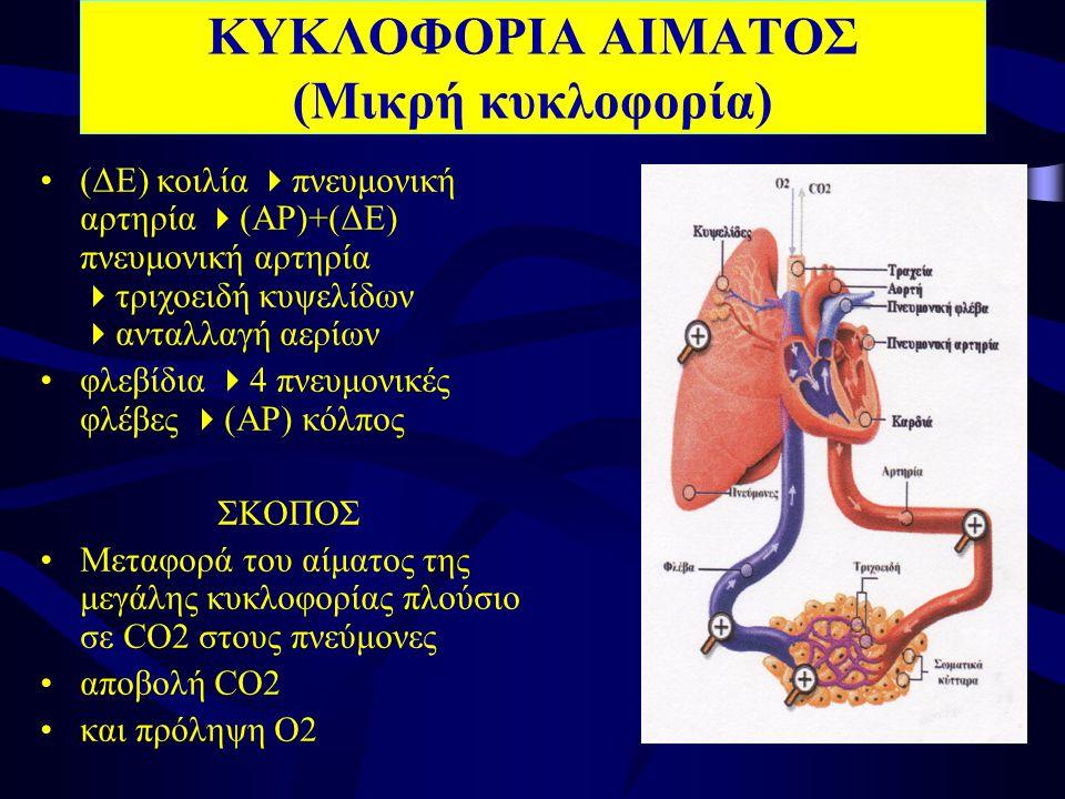 ΚΥΚΛΟΦΟΡΙΑ ΑΙΜΑΤΟΣ (Μικρή κυκλοφορία) •(ΔΕ) κοιλία  πνευμονική αρτηρία  (ΑΡ)+(ΔΕ) πνευμονική αρτηρία  τριχοειδή κυψελίδων  ανταλλαγή αερίων •φλεβίδια  4 πνευμονικές φλέβες  (ΑΡ) κόλπος ΣΚΟΠΟΣ •Μεταφορά του αίματος της μεγάλης κυκλοφορίας πλούσιο σε CO2 στους πνεύμονες •αποβολή CO2 •και πρόληψη O2