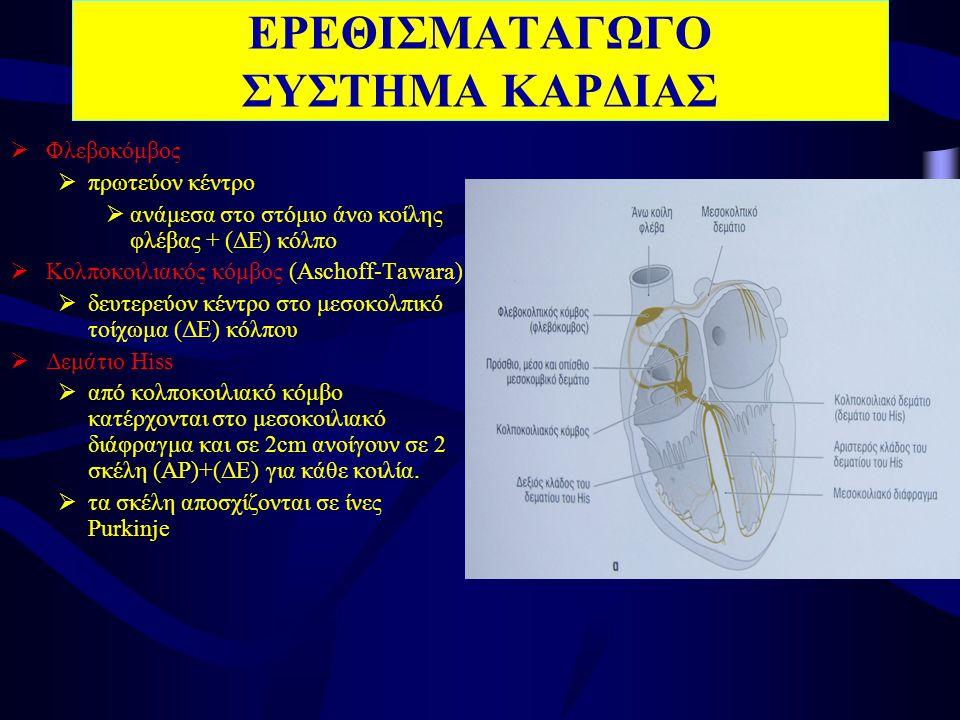 ΕΡΕΘΙΣΜΑΤΑΓΩΓΟ ΣΥΣΤΗΜΑ ΚΑΡΔΙΑΣ  Φλεβοκόμβος  πρωτεύον κέντρο  ανάμεσα στο στόμιο άνω κοίλης φλέβας + (ΔΕ) κόλπο  Κολποκοιλιακός κόμβος (Aschoff-Tawara)  δευτερεύον κέντρο στο μεσοκολπικό τοίχωμα (ΔΕ) κόλπου  Δεμάτιο Hiss  από κολποκοιλιακό κόμβο κατέρχονται στο μεσοκοιλιακό διάφραγμα και σε 2cm ανοίγουν σε 2 σκέλη (ΑΡ)+(ΔΕ) για κάθε κοιλία.