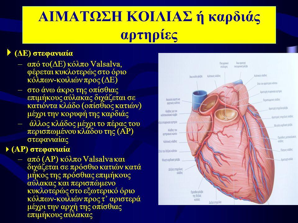 ΑΙΜΑΤΩΣΗ ΚΟΙΛΙΑΣ ή καρδιάς αρτηρίες  (ΔΕ) στεφανιαία –από το(ΔΕ) κόλπο Valsalva, φέρεται κυκλοτερώς στο όριο κόλπων-κοιλιών προς (ΔΕ) –στο άνω άκρο της οπίσθιας επιμήκους αύλακας διχάζεται σε κατιόντα κλάδο (οπίσθιος κατιών) μέχρι την κορυφή της καρδιάς – άλλος κλάδος μέχρι το πέρας του περισπωμένου κλάδου της (ΑΡ) στεφανιαίας  (ΑΡ) στεφανιαία –από (ΑΡ) κόλπο Valsalva και διχάζεται σε πρόσθιο κατιών κατά μήκος της πρόσθιας επιμήκους αύλακας και περισπώμενο κυκλοτερώς στο εξωτερικό όριο κόλπων-κοιλιών προς τ' αριστερά μέχρι την αρχή της οπίσθιας επιμήκους αύλακας