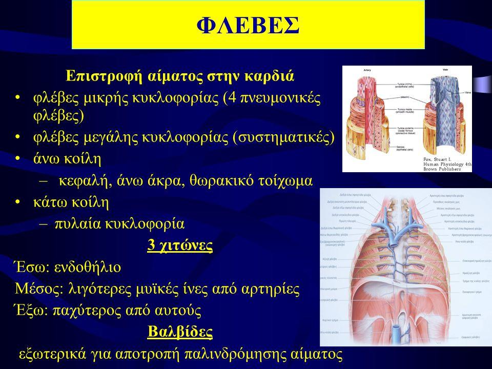 ΦΛΕΒΕΣ Επιστροφή αίματος στην καρδιά •φλέβες μικρής κυκλοφορίας (4 πνευμονικές φλέβες) •φλέβες μεγάλης κυκλοφορίας (συστηματικές) •άνω κοίλη – κεφαλή, άνω άκρα, θωρακικό τοίχωμα •κάτω κοίλη –πυλαία κυκλοφορία 3 χιτώνες Έσω: ενδοθήλιο Μέσος: λιγότερες μυϊκές ίνες από αρτηρίες Έξω: παχύτερος από αυτούς Βαλβίδες εξωτερικά για αποτροπή παλινδρόμησης αίματος