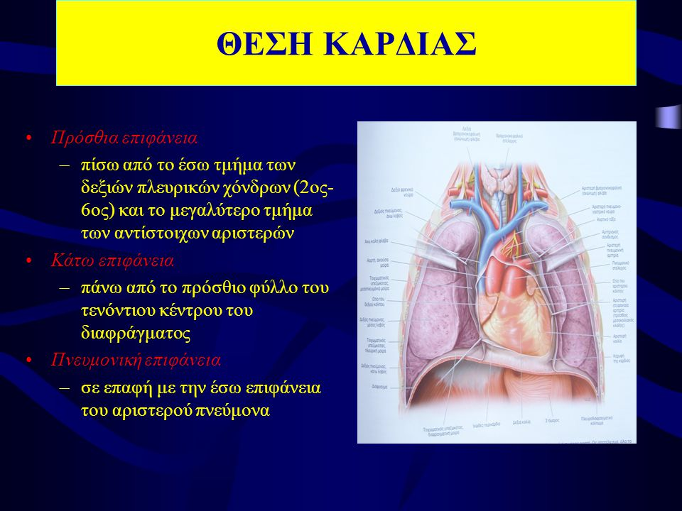 ΘΕΣΗ ΚΑΡΔΙΑΣ •Πρόσθια επιφάνεια –πίσω από το έσω τμήμα των δεξιών πλευρικών χόνδρων (2ος- 6ος) και το μεγαλύτερο τμήμα των αντίστοιχων αριστερών •Κάτω επιφάνεια –πάνω από το πρόσθιο φύλλο του τενόντιου κέντρου του διαφράγματος •Πνευμονική επιφάνεια –σε επαφή με την έσω επιφάνεια του αριστερού πνεύμονα