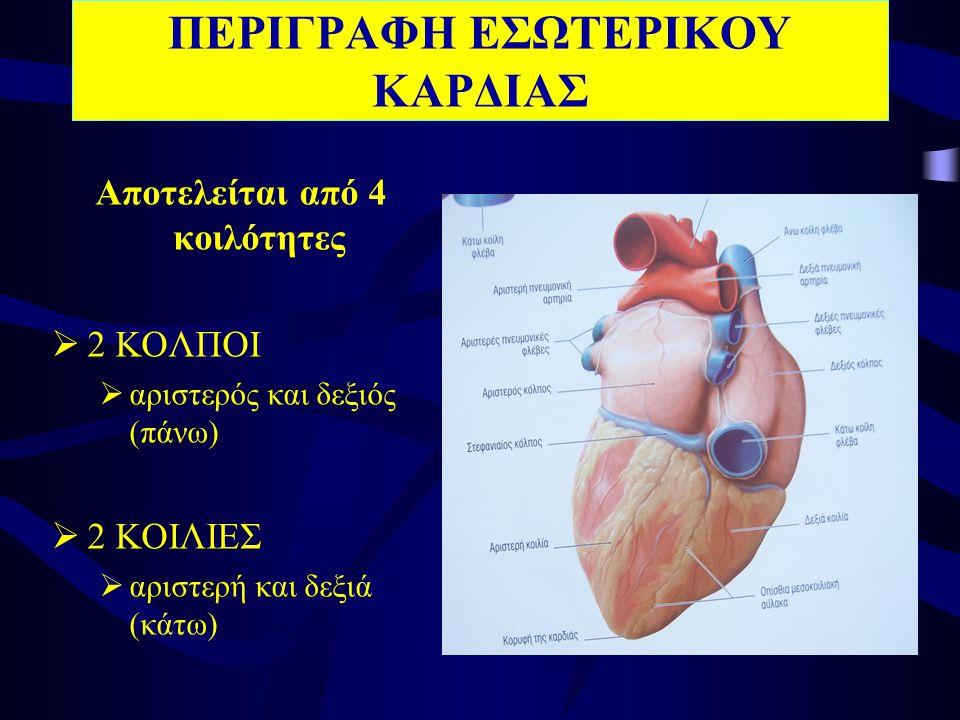 1.άνω 2.κάτω 3.Έξω 4.Έσω 5.Οπίσθιο 6.πρόσθιο •Πρόσθιο – κολποκοιλιακό στόμιο – μιτροειδής βαλβίδα •Οπίσθιο – εκβολές 4 πνευμονικών φλεβών •Έσω :μεσοκολπικό διάφραγμα •Έξω: στόμιο αριστερού ωτίου ΑΡΙΣΤΕΡΟΣ ΚΟΛΠΟΣ Τοιχώματα
