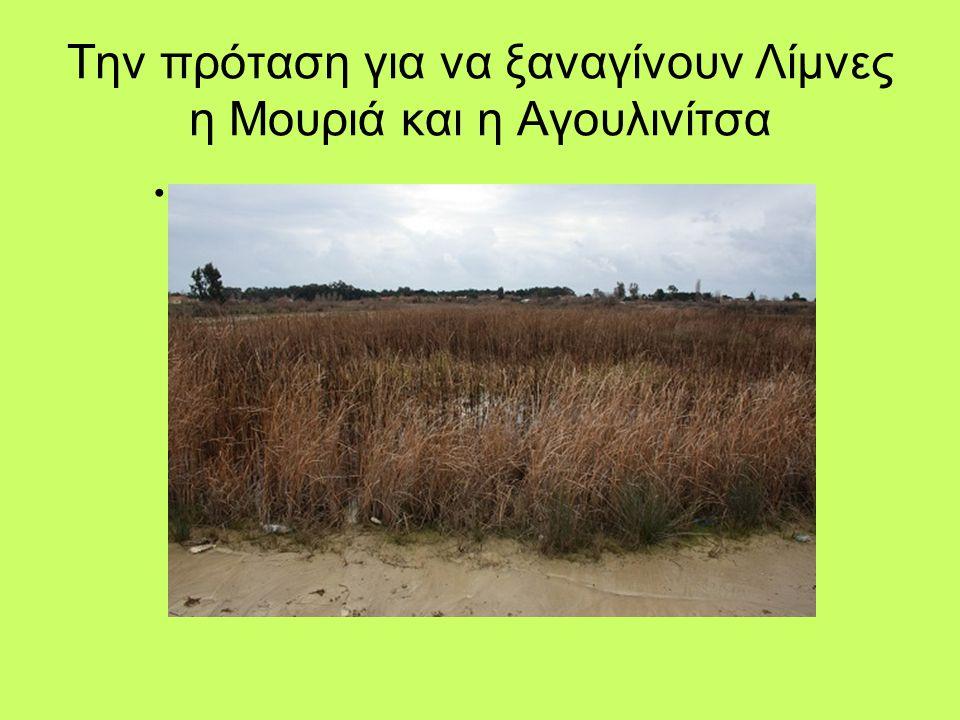 Την πρόταση για να ξαναγίνουν Λίμνες η Μουριά και η Αγουλινίτσα •.•.