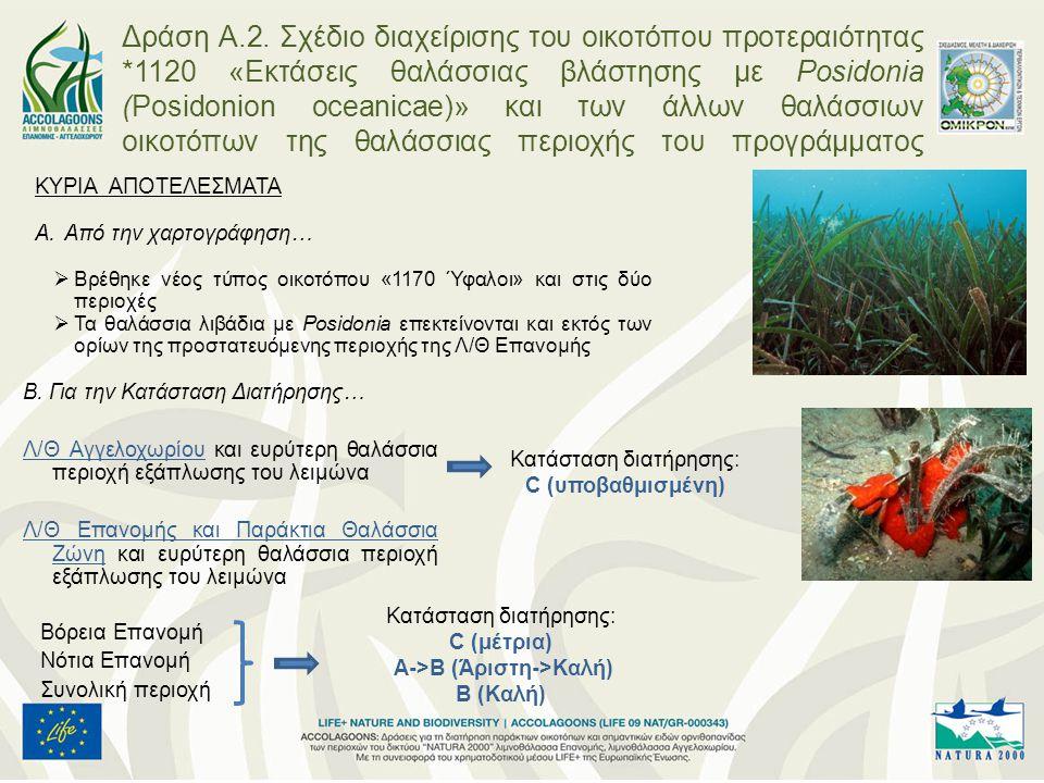 Δράση Α.2. Σχέδιο διαχείρισης του οικοτόπου προτεραιότητας *1120 «Εκτάσεις θαλάσσιας βλάστησης με Posidonia (Posidonion oceanicae)» και των άλλων θαλά
