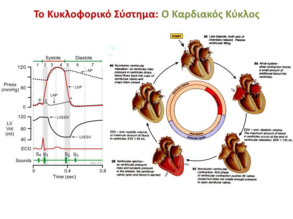 Το Κυκλοφορικό Σύστημα: Ο Καρδιακός Κύκλος