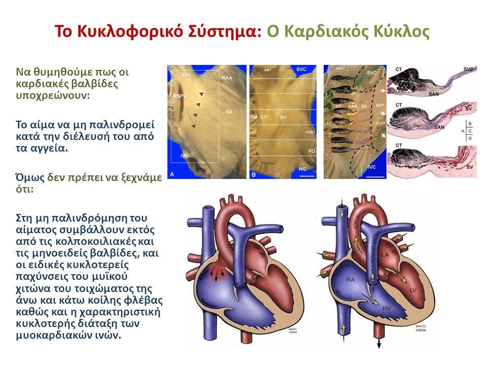 Το Κυκλοφορικό Σύστημα: Ο Καρδιακός Κύκλος Να θυμηθούμε πως οι καρδιακές βαλβίδες υποχρεώνουν: Το αίμα να μη παλινδρομεί κατά την διέλευσή του από τα