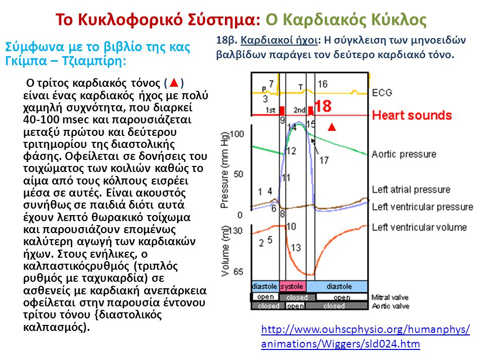 Το Κυκλοφορικό Σύστημα: Ο Καρδιακός Κύκλος Σύμφωνα με το βιβλίο της κας Γκίμπα – Τζιαμπίρη: Ο τρίτος καρδιακός τόνος ( ▲ ) είναι ένας καρδιακός ήχος μ