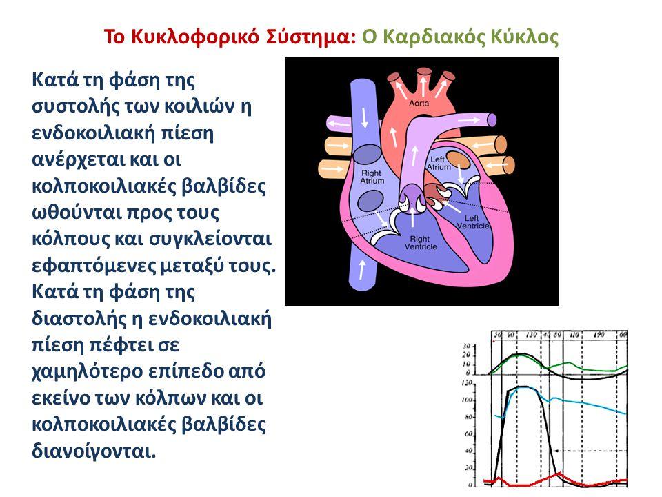 Το Κυκλοφορικό Σύστημα: Ο Καρδιακός Κύκλος Κατά τη φάση της συστολής των κοιλιών η ενδοκοιλιακή πίεση ανέρχεται και οι κολποκοιλιακές βαλβίδες ωθούντα
