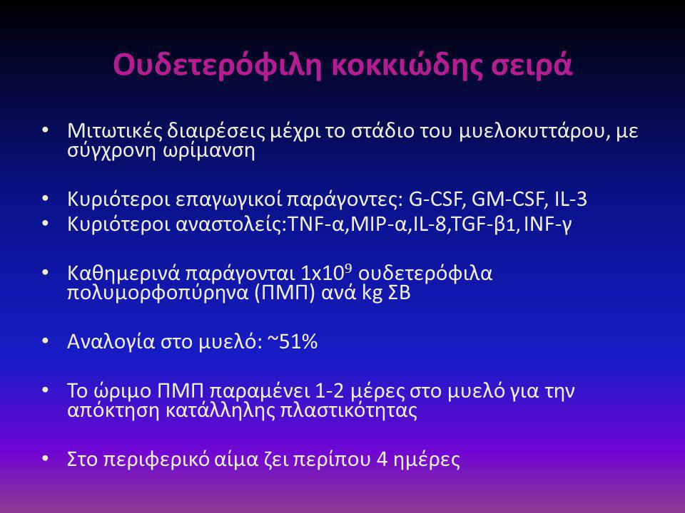 Oυδετερόφιλη κοκκιώδης σειρά • Μιτωτικές διαιρέσεις μέχρι το στάδιο του μυελοκυττάρου, με σύγχρονη ωρίμανση • Κυριότεροι επαγωγικοί παράγοντες: G-CSF, GM-CSF, IL-3 • Κυριότεροι αναστολείς:TNF-α,MIP-α,IL-8,TGF-β 1, INF-γ • Καθημερινά παράγονται 1x10 9 oυδετερόφιλα πολυμορφοπύρηνα (ΠΜΠ) ανά kg ΣΒ • Αναλογία στο μυελό: ~51% • Το ώριμο ΠΜΠ παραμένει 1-2 μέρες στο μυελό για την απόκτηση κατάλληλης πλαστικότητας • Στο περιφερικό αίμα ζει περίπου 4 ημέρες
