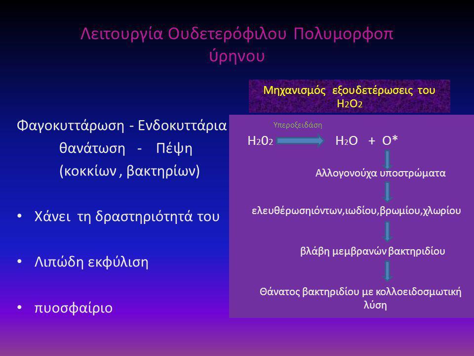 Λειτουργία Ουδετερόφιλου Πολυμορφοπ ύ ρηνου Φαγοκυττάρωση - Ενδοκυττάρια θανάτωση - Πέψη (κοκκίων, βακτηρίων) • Χάνει τη δραστηριότητά του • Λιπώδη εκφύλιση • πυοσφαίριο Μηχανισμός εξουδετέρωσεις του Η 2 Ο 2 Υπεροξειδάση Η 2 0 2 H 2 O + O* Αλλογονούχα υποστρώματα ελευθέρωσηιόντων,ιωδίου,βρωμίου,χλωρίου βλάβη μεμβρανών βακτηριδίου Θάνατος βακτηριδίου με κολλοειδοσμωτική λύση