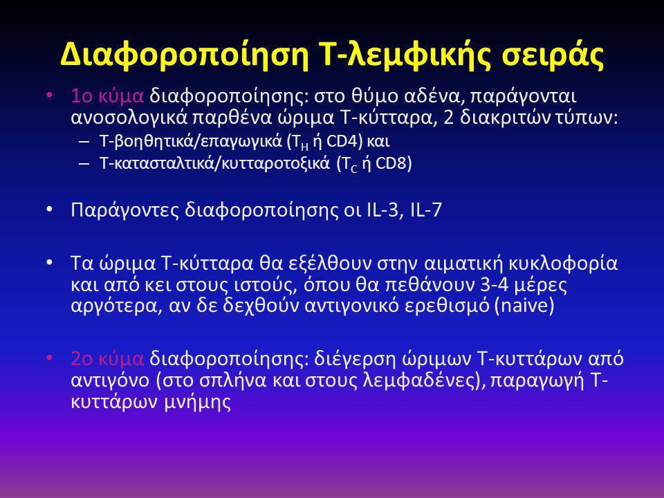 Διαφοροποίηση Τ-λεμφικής σειράς • 1ο κύμα διαφοροποίησης: στο θύμο αδένα, παράγονται ανοσολογικά παρθένα ώριμα Τ-κύτταρα, 2 διακριτών τύπων: – Τ-βοηθητικά/επαγωγικά (Τ H ή CD4) και – Τ-κατασταλτικά/κυτταροτοξικά (Τ C ή CD8) • Παράγοντες διαφοροποίησης οι IL-3, IL-7 • Τα ώριμα Τ-κύτταρα θα εξέλθουν στην αιματική κυκλοφορία και από κει στους ιστούς, όπου θα πεθάνουν 3-4 μέρες αργότερα, αν δε δεχθούν αντιγονικό ερεθισμό (naive) • 2ο κύμα διαφοροποίησης: διέγερση ώριμων Τ-κυττάρων από αντιγόνο (στο σπλήνα και στους λεμφαδένες), παραγωγή Τ- κυττάρων μνήμης