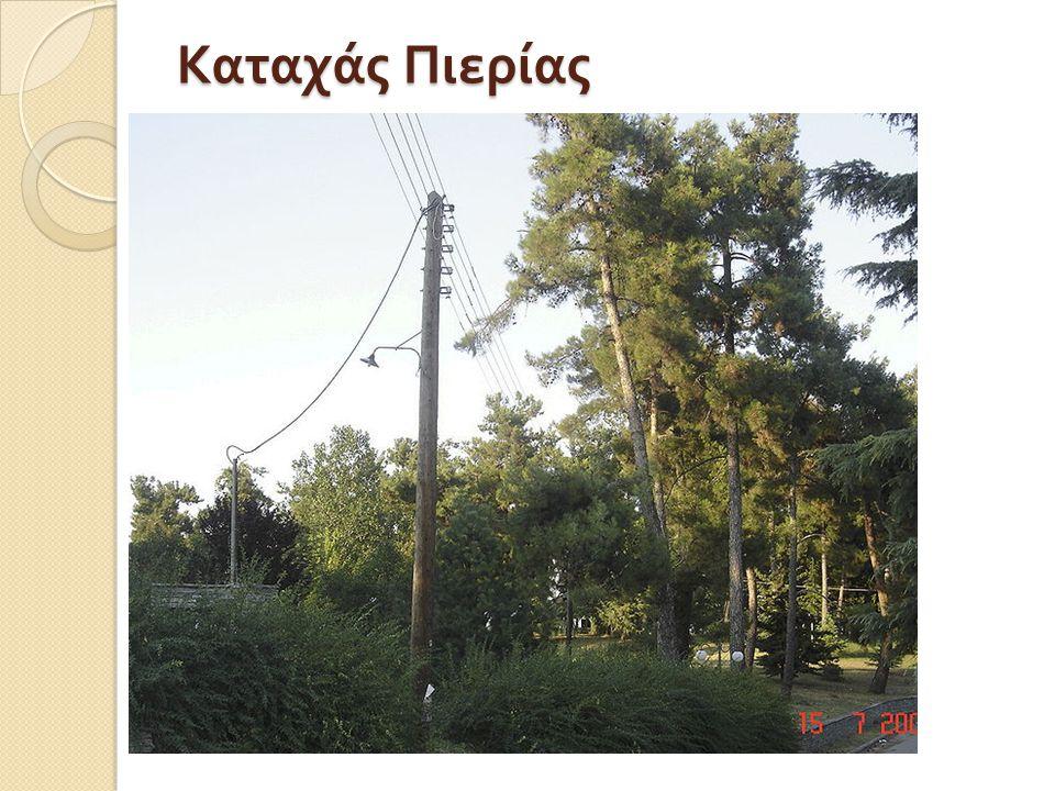 Ο Καταχάς είναι χωριό του νομού Πιερίας με 716 κατοίκους, σύμφωνα με την απογραφή του 2001.