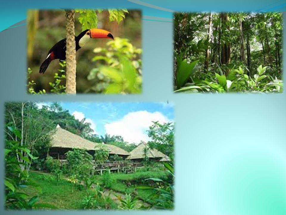 ΑΜΑΖΟΝΙΟΣ Ο Αμαζόνιος είναι ένας από τους μεγαλύτερους ποταμούς της Γης καθώς το συνολικό του μήκος είναι 6.840 χιλιόμετρα. Ο Αμαζόνιος είναι επίσης ο
