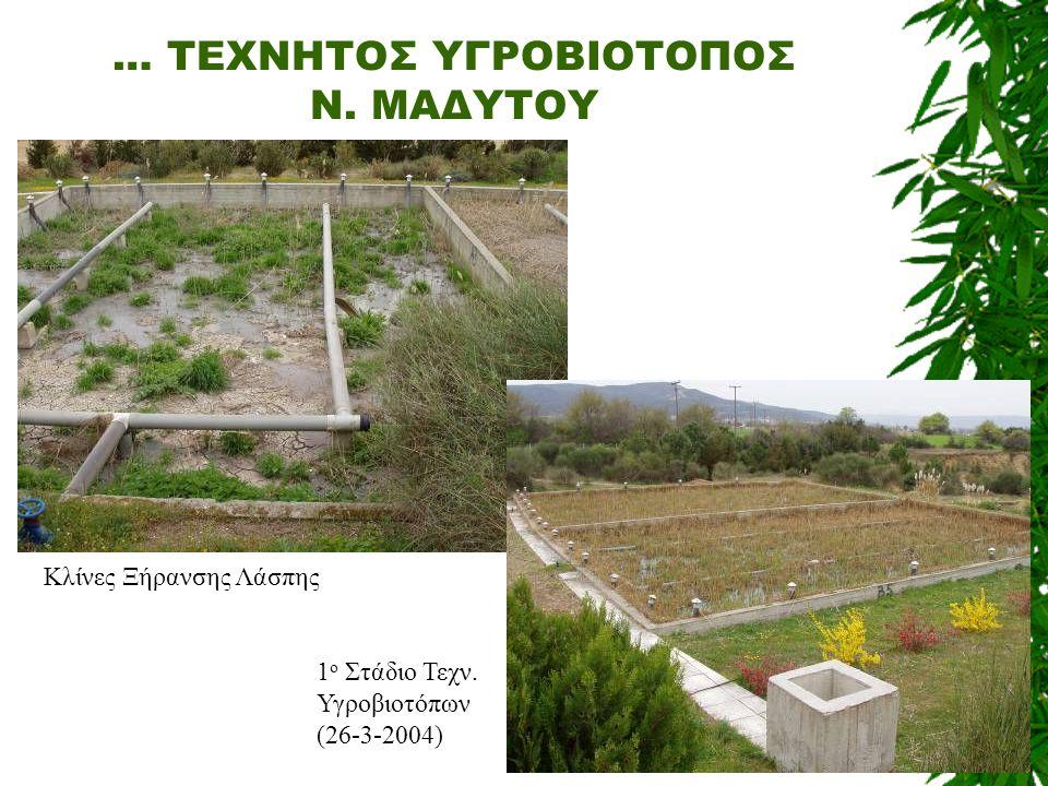 … ΤΕΧΝΗΤΟΣ ΥΓΡΟΒΙΟΤΟΠΟΣ Ν. ΜΑΔΥΤΟΥ Κλίνες Ξήρανσης Λάσπης 1 ο Στάδιο Τεχν. Υγροβιοτόπων (26-3-2004)