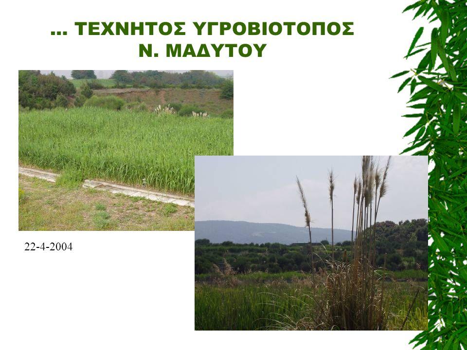 … ΤΕΧΝΗΤΟΣ ΥΓΡΟΒΙΟΤΟΠΟΣ Ν. ΜΑΔΥΤΟΥ 22-4-2004