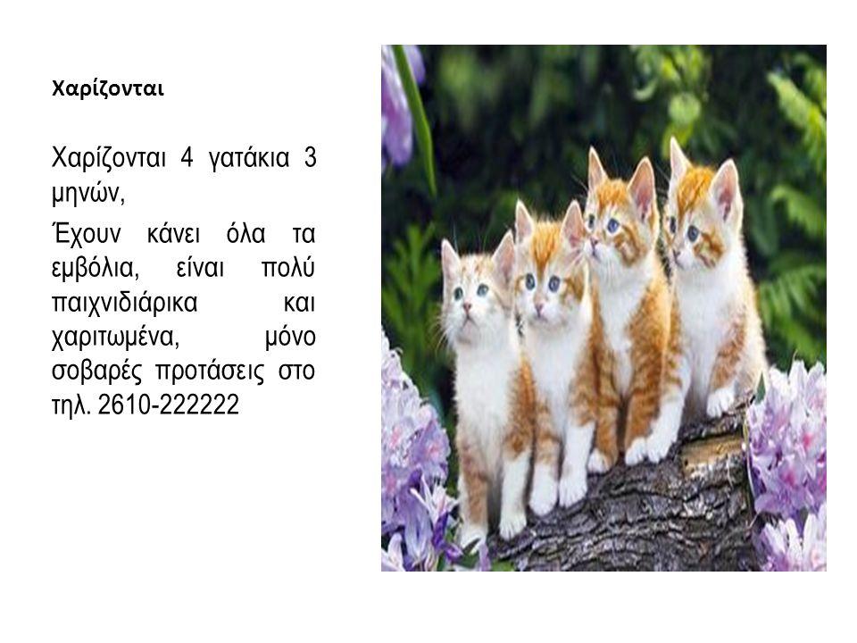 Χαρίζονται Χαρίζονται 4 γατάκια 3 μηνών, Έχουν κάνει όλα τα εμβόλια, είναι πολύ παιχνιδιάρικα και χαριτωμένα, μόνο σοβαρές προτάσεις στο τηλ. 2610-222