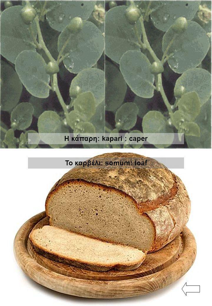 Το καρβέλι: somum: loaf Η κάπαρη: kapari : caper