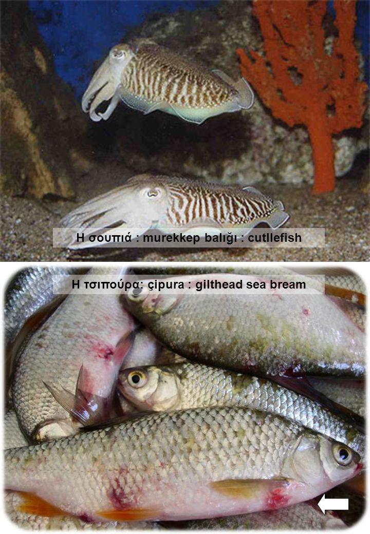 Η σουπιά : murekkep balığı : cutllefish Η τσιπούρα: çipura : gilthead sea bream