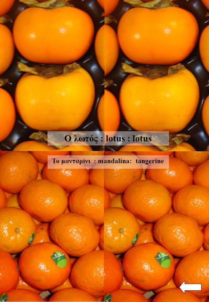 Το μανταρίνι : mandalina: tangerine Ο λωτός : lotus : lotus