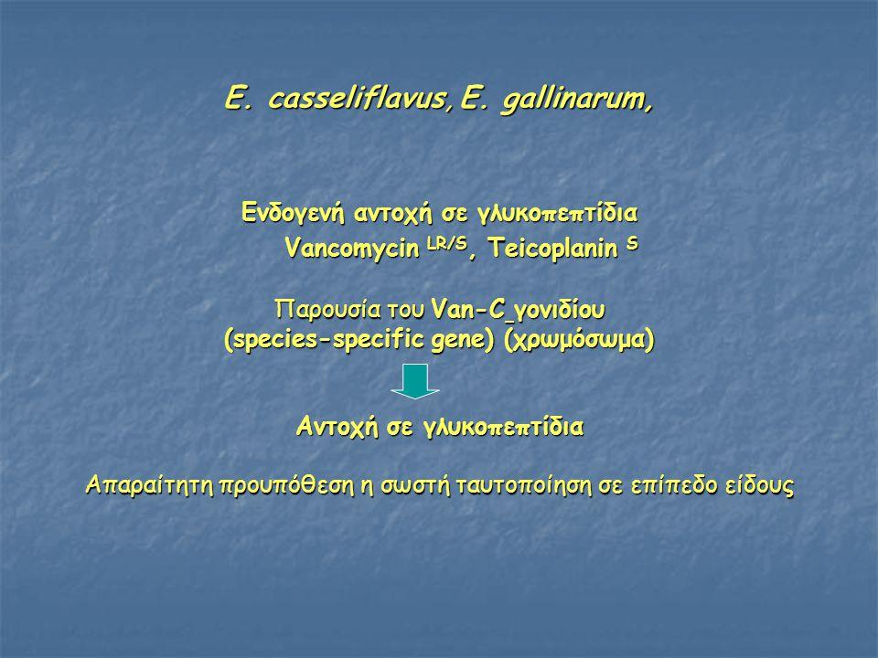 E.casseliflavus, E.
