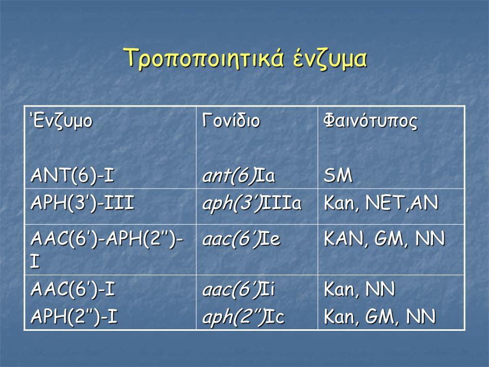 Τροποποιητικά ένζυμα 'ΕνζυμοΑΝΤ(6)-ΙΓονίδιο ant(6)Ia ΦαινότυποςSM ΑPH(3')-III aph(3')IIIa Kan, NET,AN AAC(6')-APH(2'')- I aac(6')Ie KAN, GM, NN AAC(6')-IAPH(2'')-I aac(6')Ii aph(2'')Ic Kan, NN Kan, GM, NN