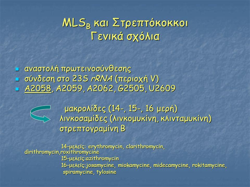 ΜLS B και Στρεπτόκοκκοι Γενικά σχόλια  αναστολή πρωτεινοσύνθεσης  σύνδεση στο 23S rRNA (περιοχή V)  Α2058, A2059, A2062, G2505, U2609 μακρολίδες (14-, 15-, 16 μερή) μακρολίδες (14-, 15-, 16 μερή) λινκοσαμίδες (λινκομυκίνη, κλινταμυκίνη) λινκοσαμίδες (λινκομυκίνη, κλινταμυκίνη) στρεπτογραμίνη Β στρεπτογραμίνη Β 14-μελείς: erythromycin, clarithromycin, dirithromycin,roxithromycine 14-μελείς: erythromycin, clarithromycin, dirithromycin,roxithromycine 15-μελείς:azithromycin 15-μελείς:azithromycin 16-μελείς:josamycine, miokamycine, midecamycine, rokitamycine, 16-μελείς:josamycine, miokamycine, midecamycine, rokitamycine, spiramycine, tylosine spiramycine, tylosine